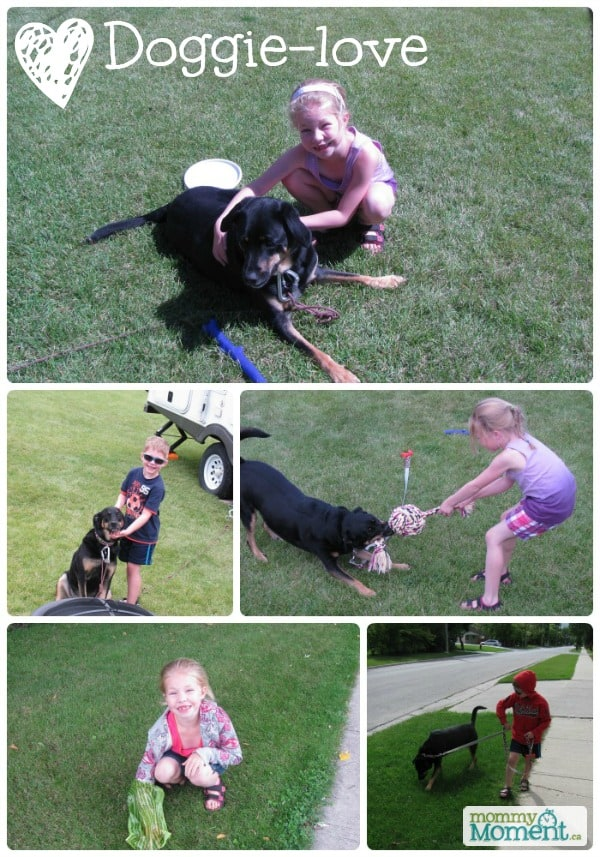 Iams Doggie Love