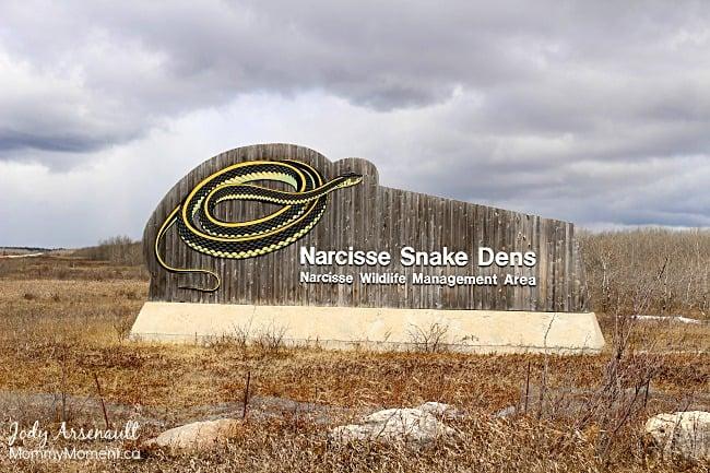 Narcisse-Snake-Dens