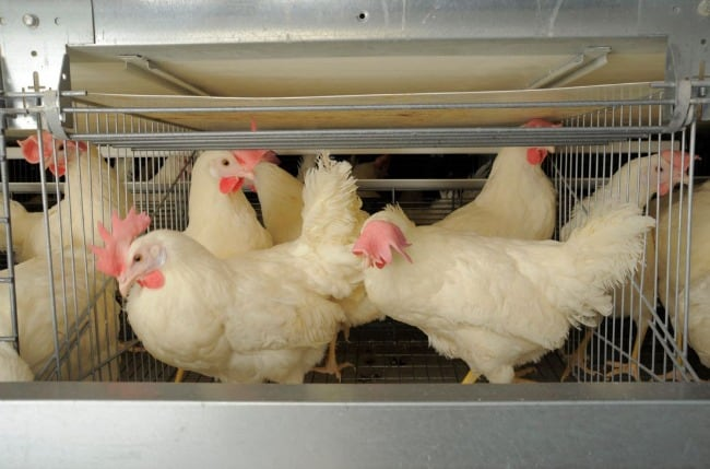Conventional-Hen-Barn