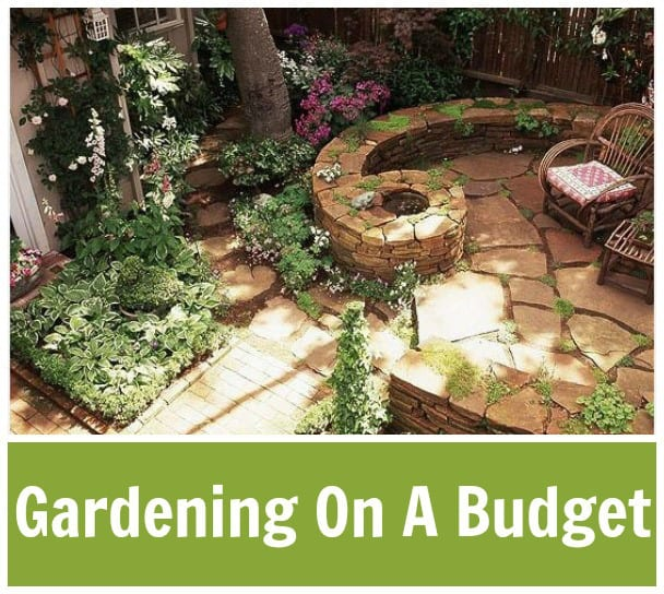 Gardening ideas for small spaces and small budgets for Great garden ideas on a budget