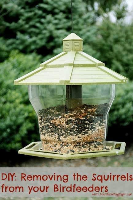 bird-feeder-2