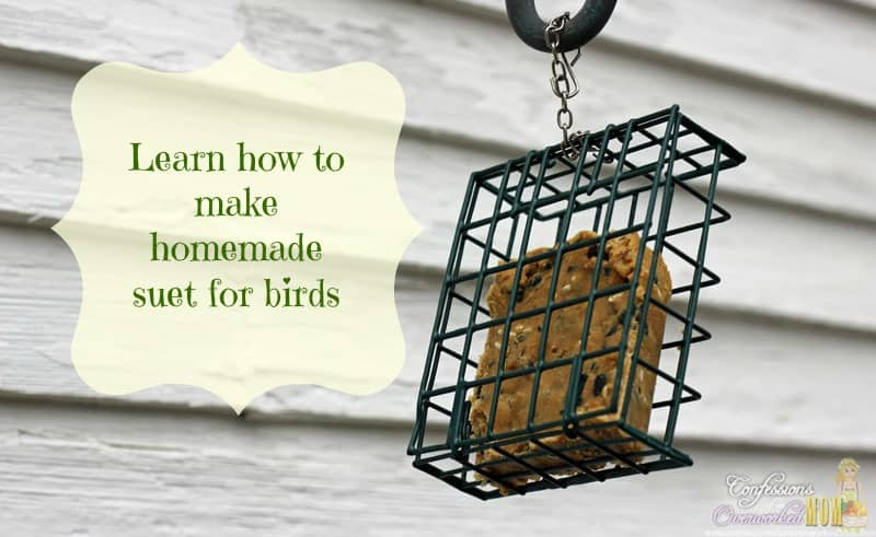 learn-how-to-make-homemade-suet-for-birds