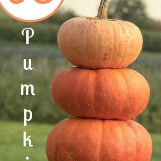 93 Pumpkin Dessert Recipes