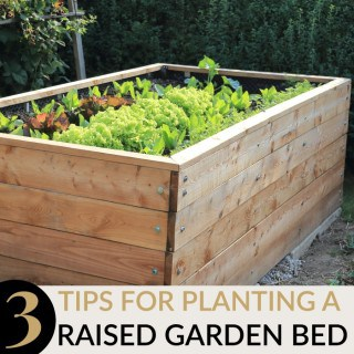 3 TIPS FOR PLANTING A RAISED GARDEN BED