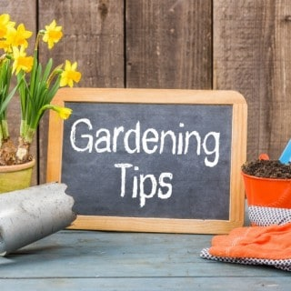 GARDENING TIPS AND TRICKS YOU WILL LOVE