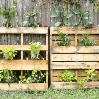 7 GARDENING TRENDS YOU SHOULD TRY