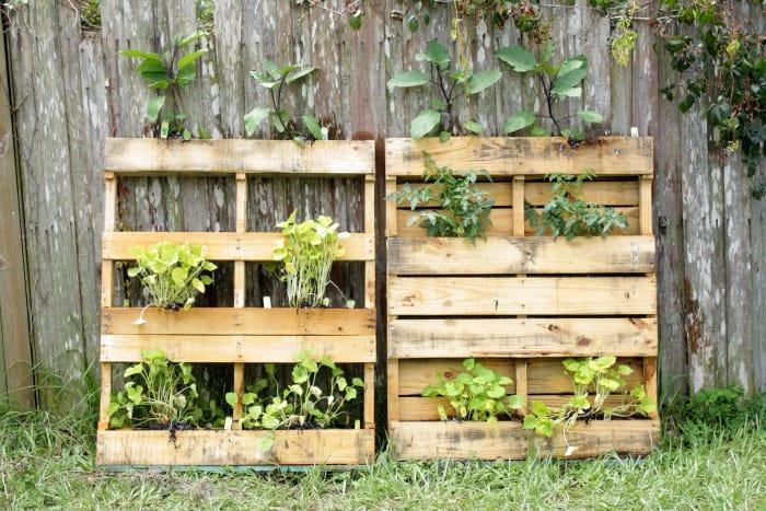 gardening trends