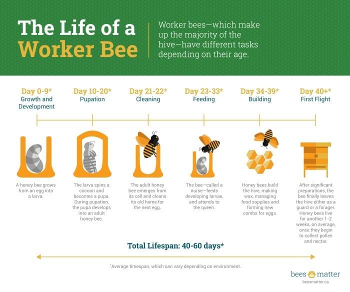 Honey Bees Matter