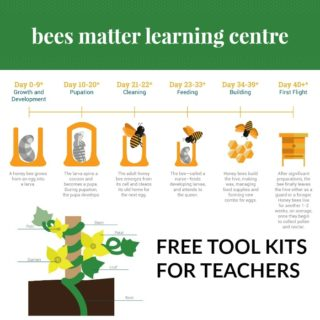 honey bees tool kit for teachers
