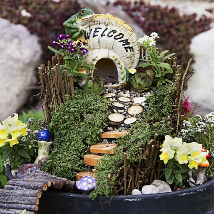 20 Black Flowers And Plants To Add Drama To Your Garden: THE BEST PLANTS FOR YOUR DIY FAIRY GARDEN