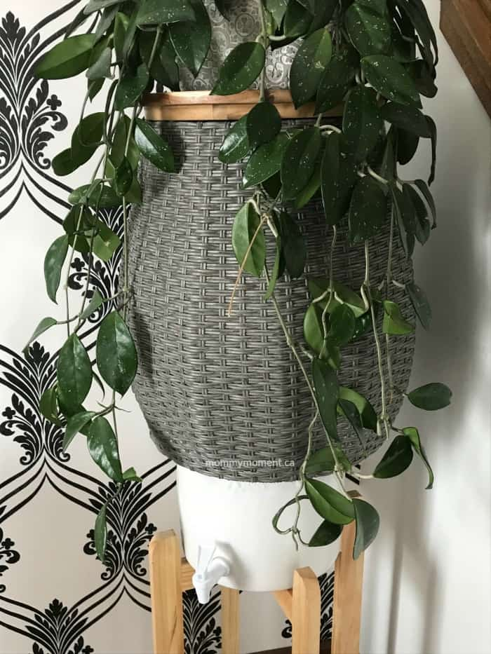 diy plant stand water cooler cover
