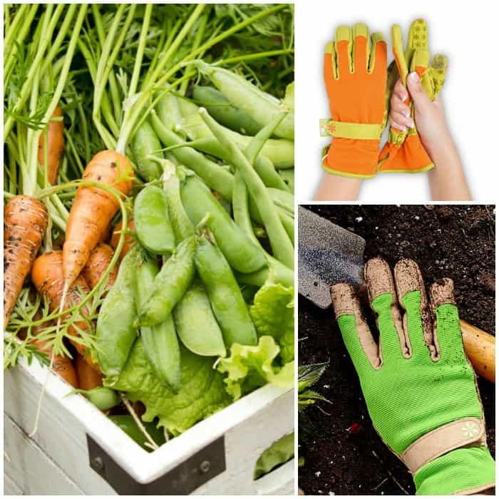 Gardening gloves for beginners