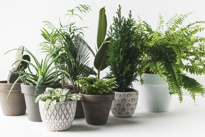 The not so obvious benefits of indoor house plants